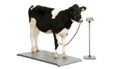 animal weighing machines in indore